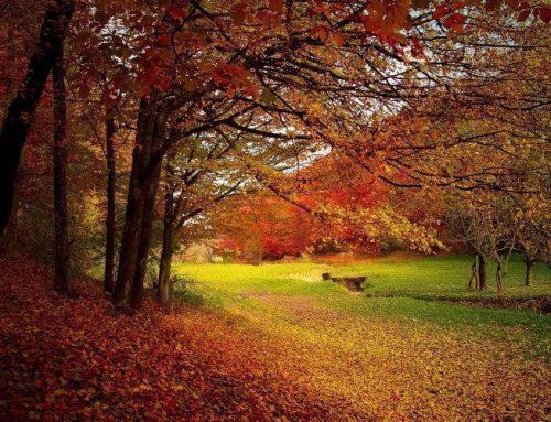 Der Herbst ist da  – Tipps gegen die kalte Jahreszeit